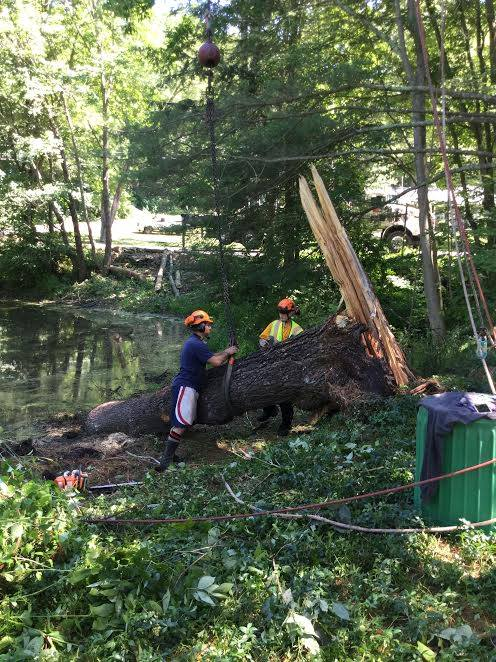 Operation: Get pine tree out of lake