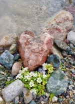 Heart rock2.jpg