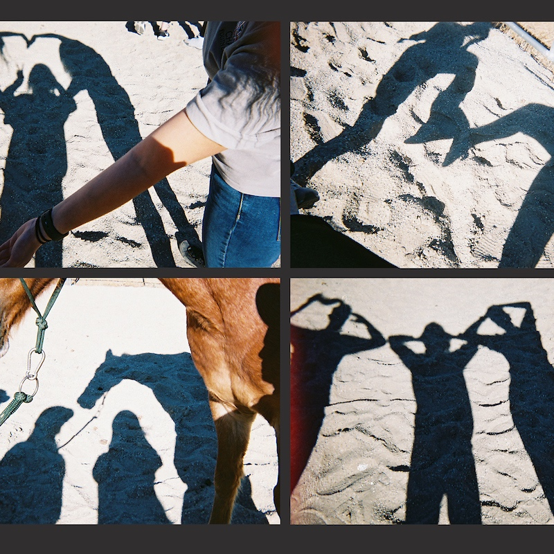 Having+fun+with+shadow+pictures+while+on+Field+Trip.jpg