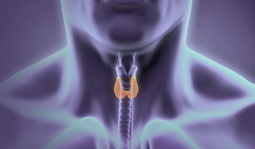 TCC_thyroid_gland
