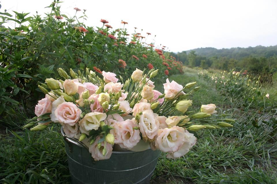Flowers05.jpg