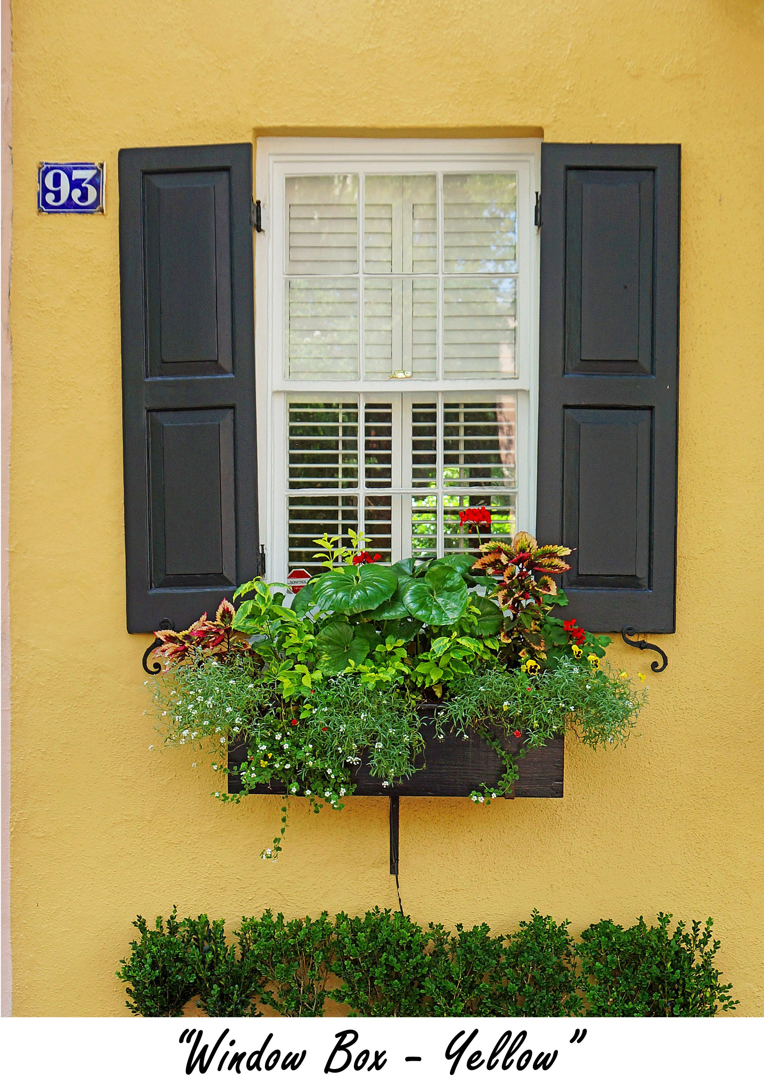 windowbox Yellow.jpg