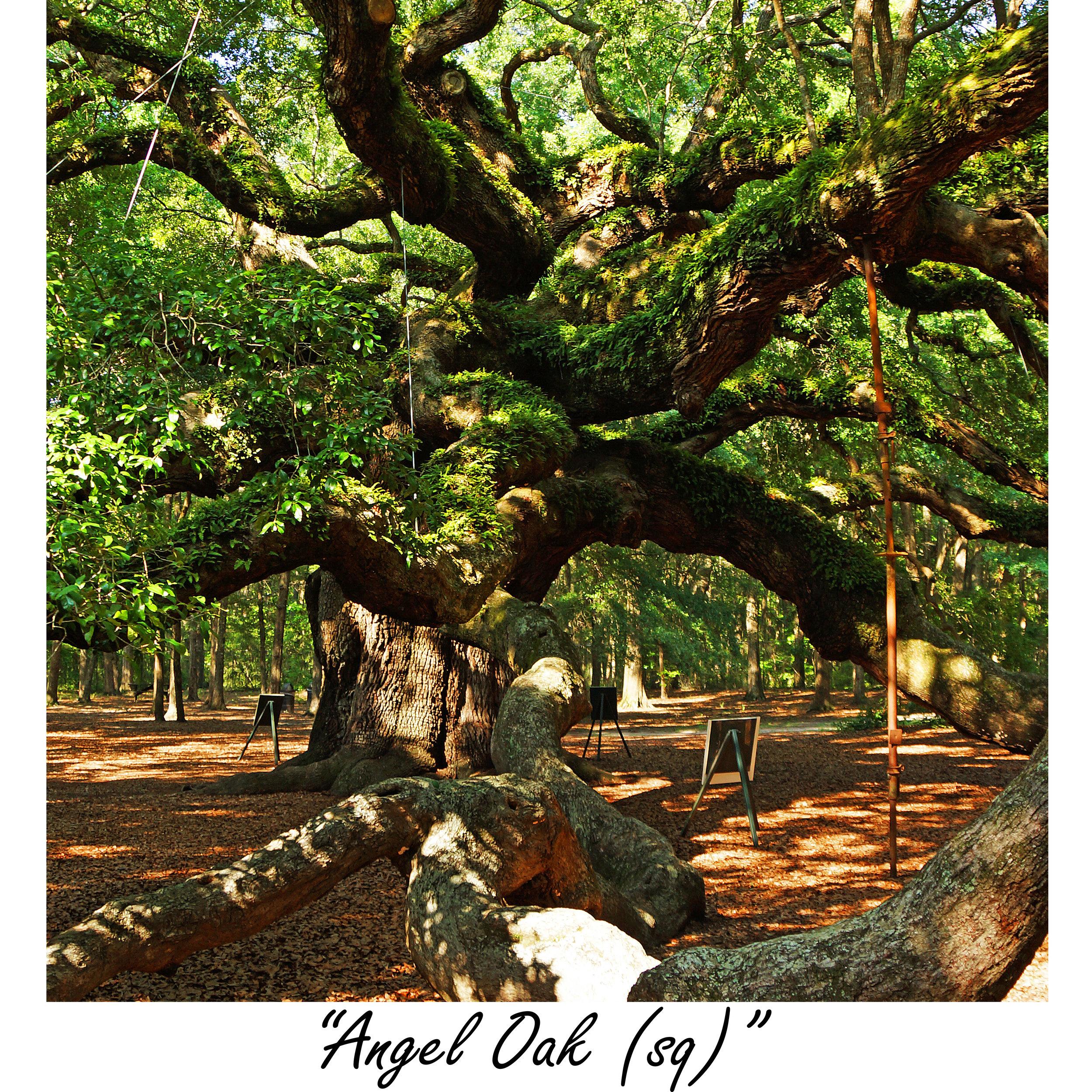 Angel Oak (sq).jpg