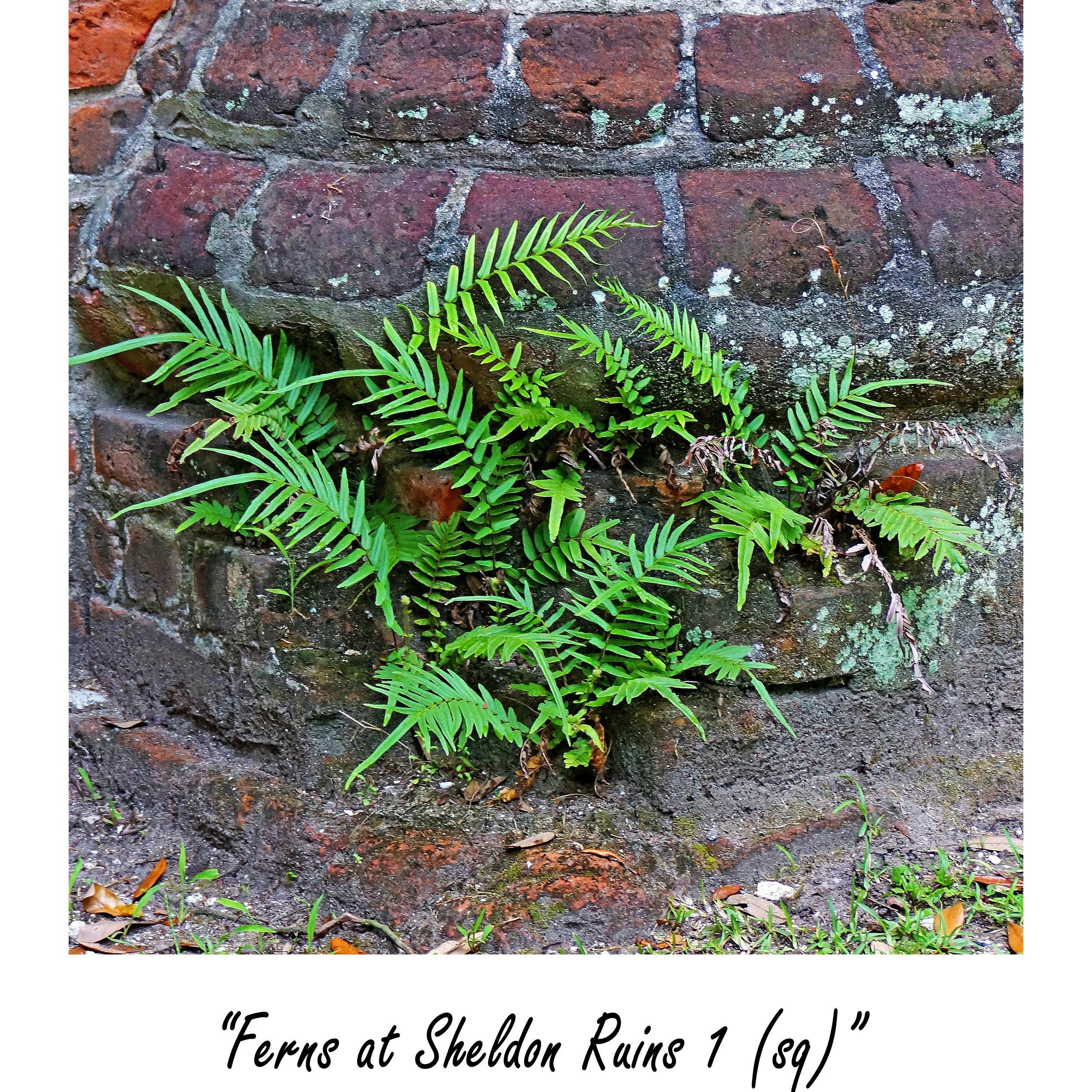 Ferns at Sheldon Ruins 1 (sq).jpg