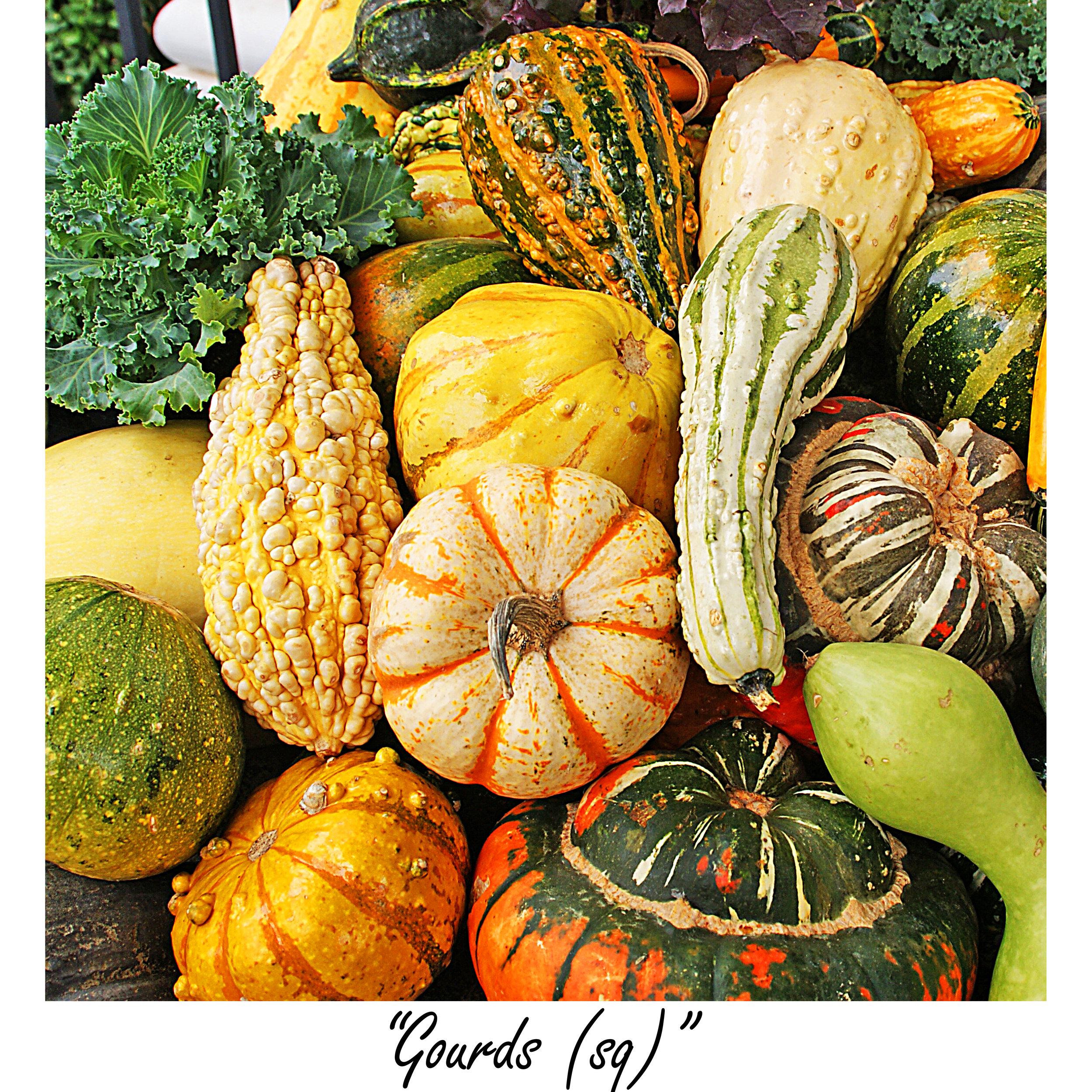 Gourds (sq).jpg