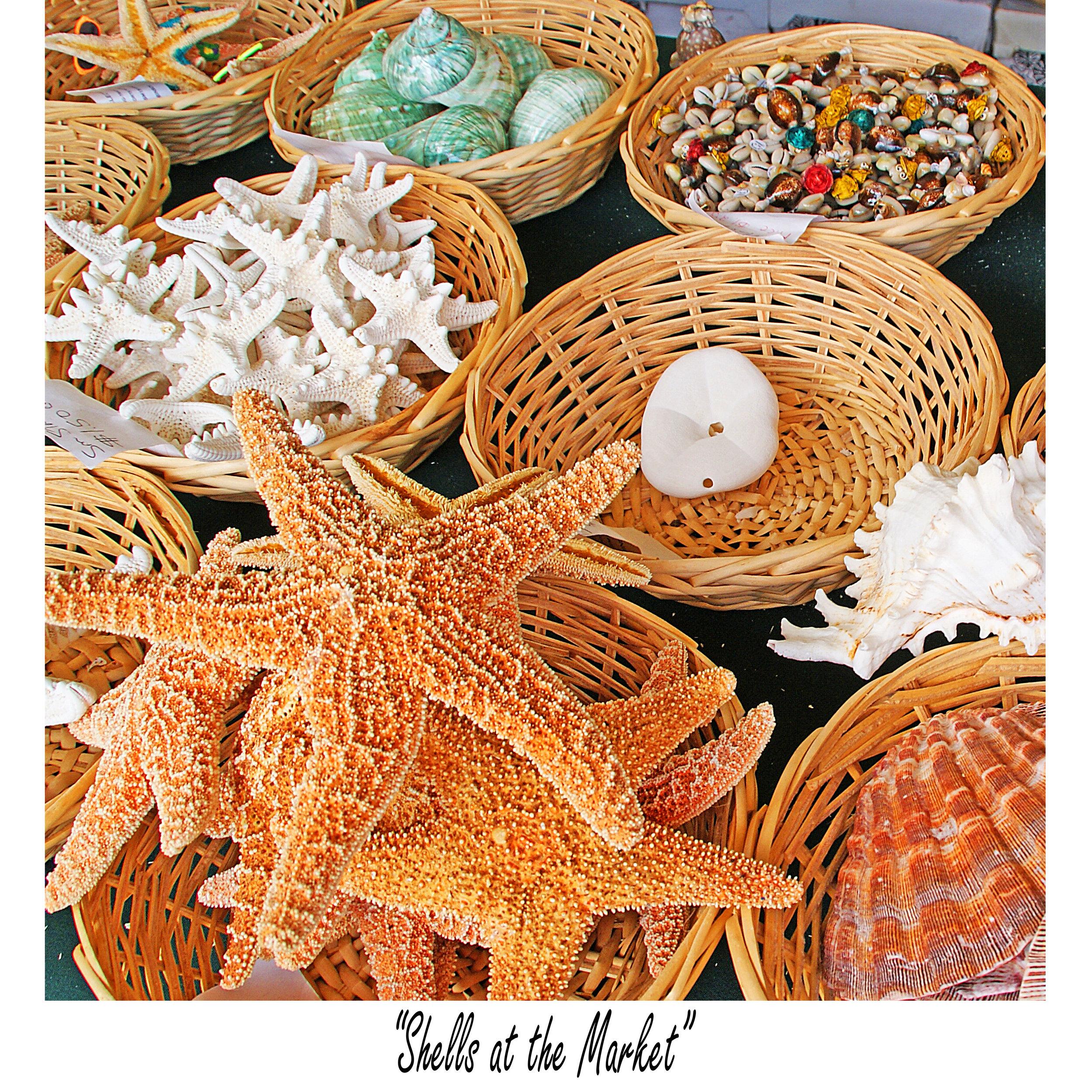 Shells at the Market (sq).jpg