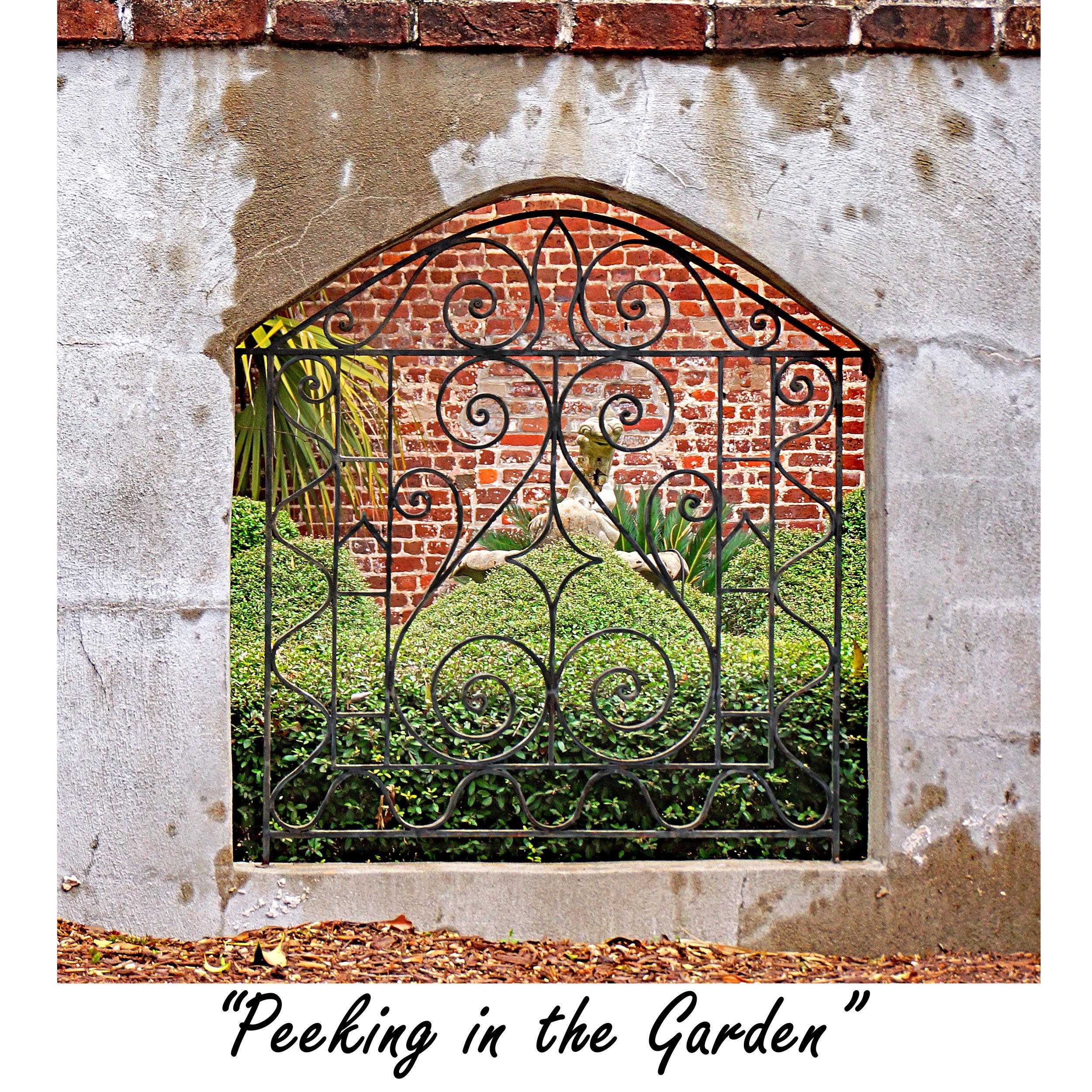 Peeking in the Garden.jpg