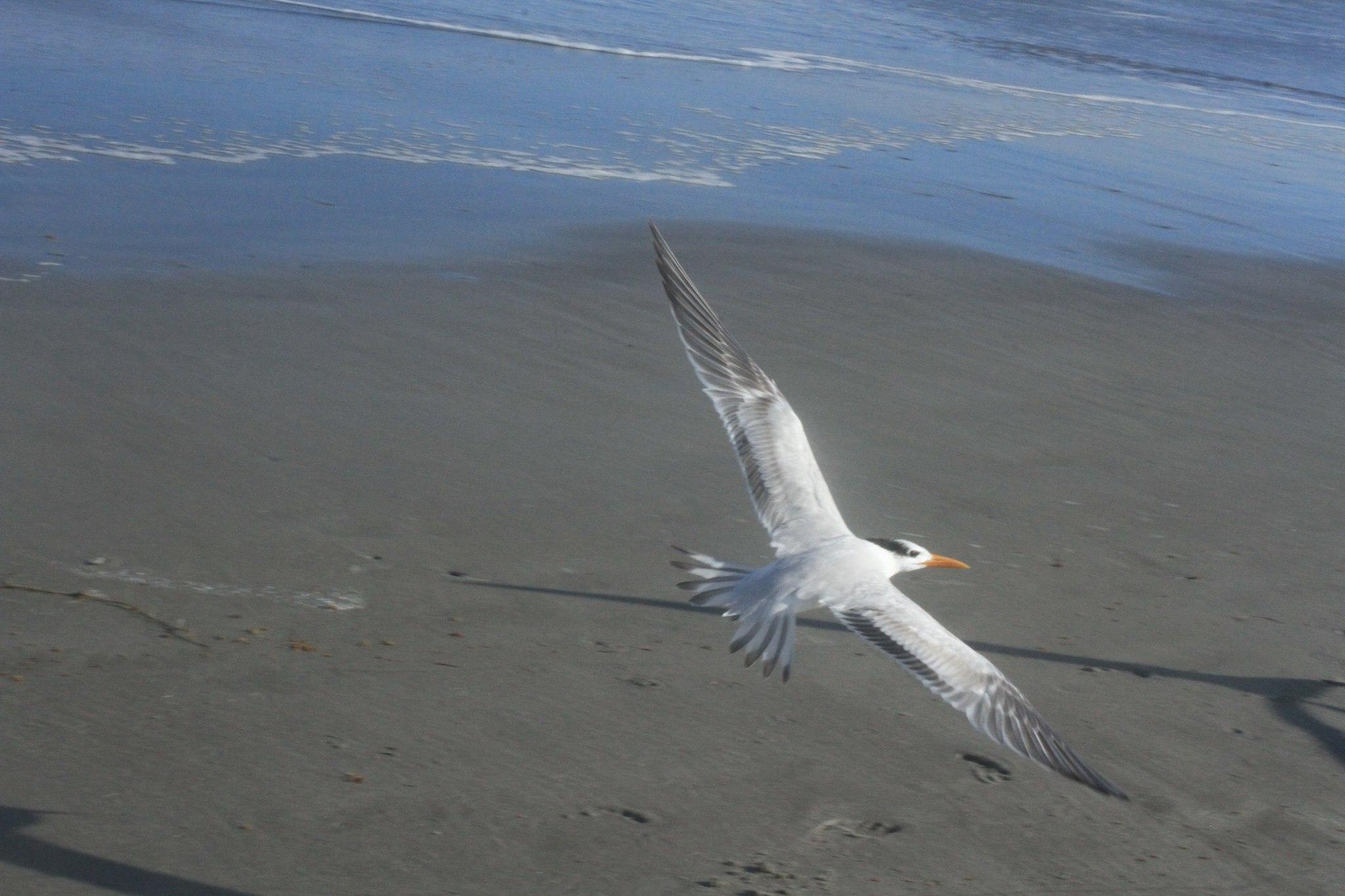 BirdOnTheBeach.jpg