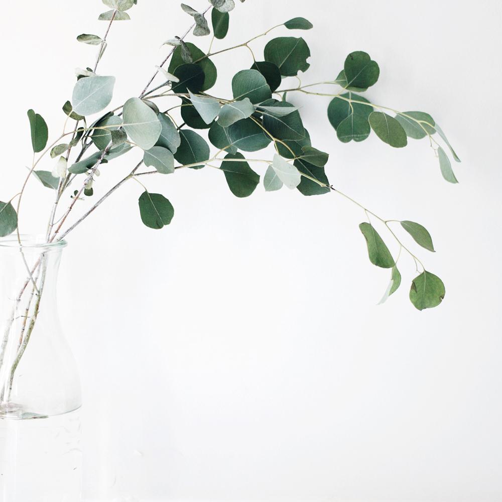 Euculyptus
