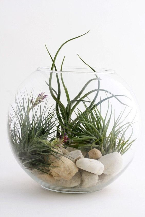 Image by twigterrariums.com