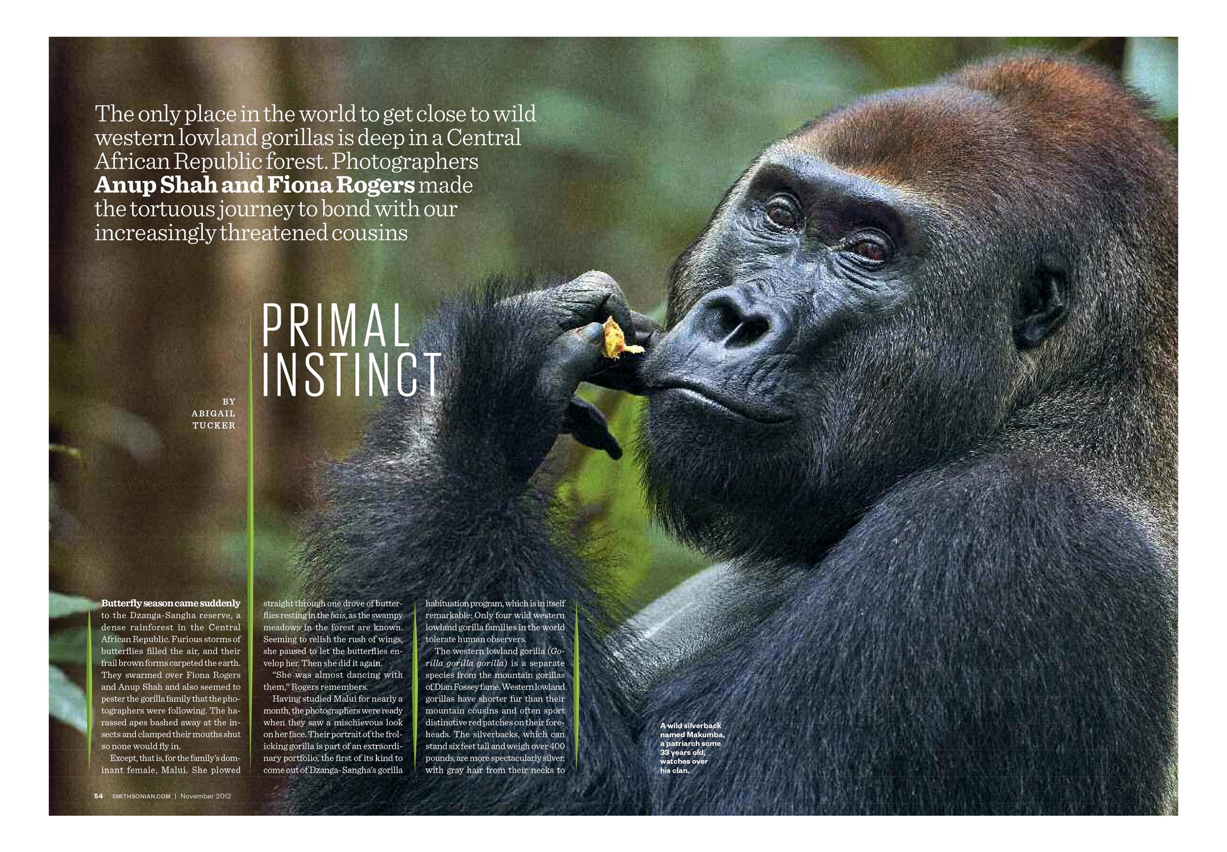 Gorillas_Page_1 copy.jpg