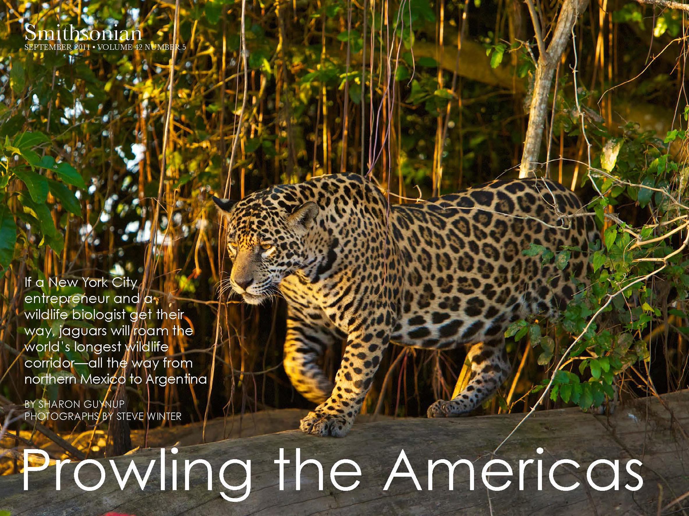 Jaguars_Page_01 copy.jpg