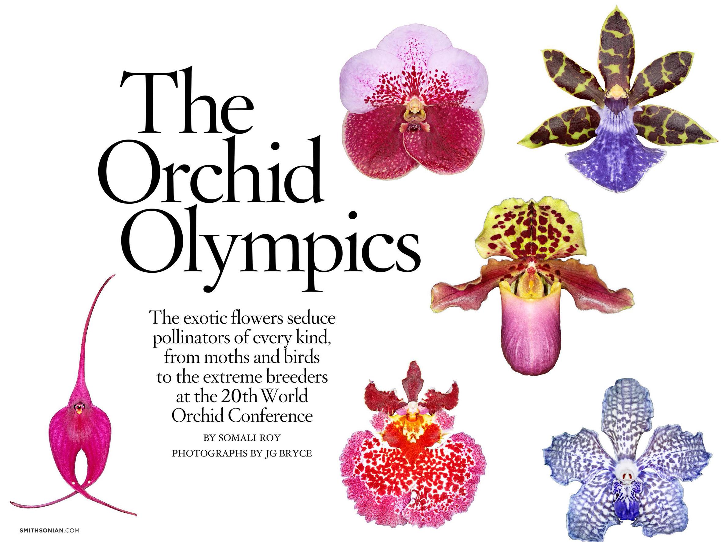 OrchidOlympics_Page_01 copy.jpg