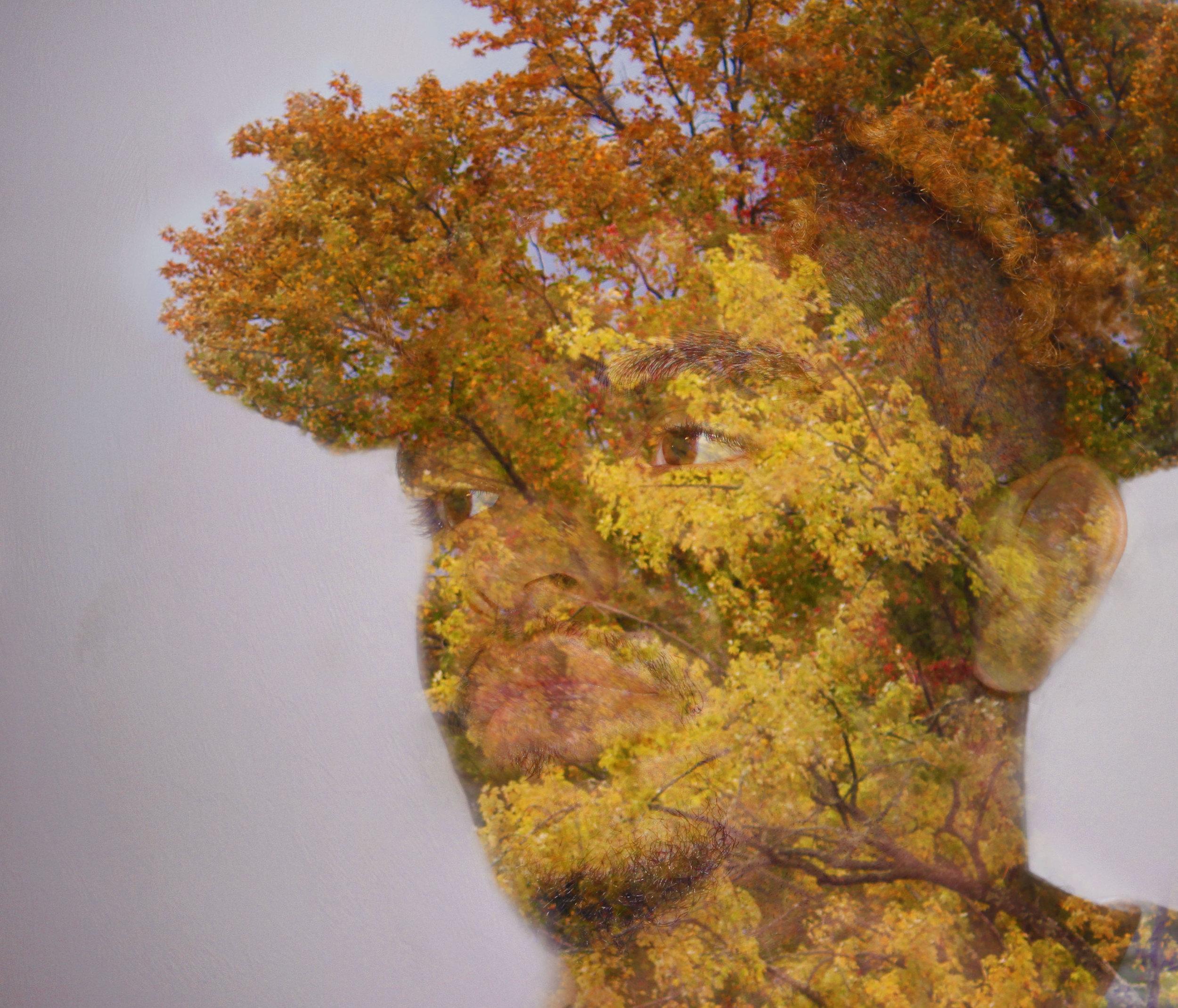 Angelo_Tree_5.jpg