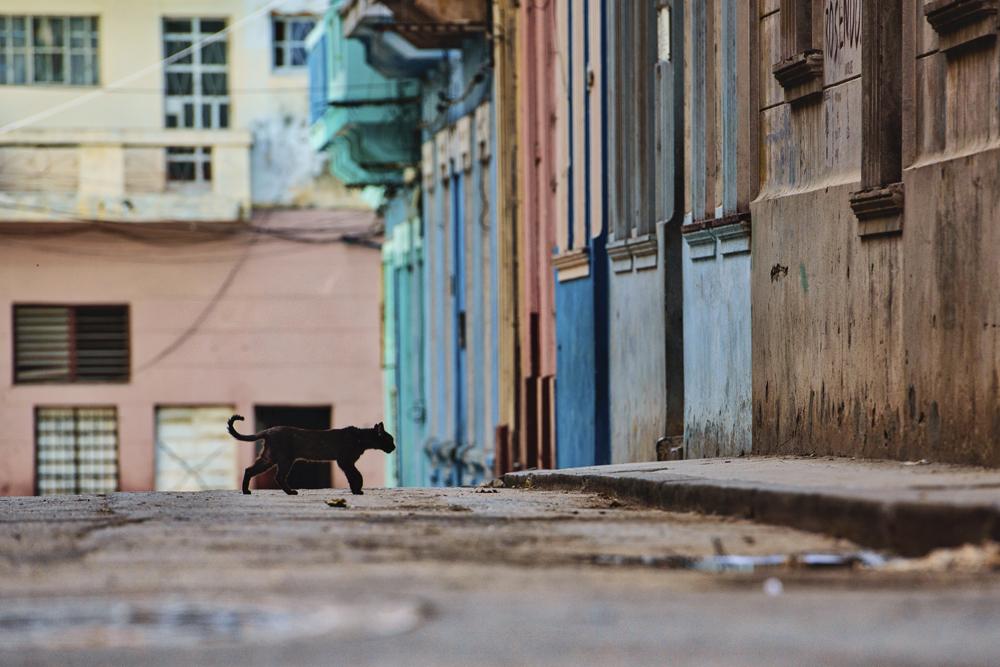 Peter Mercieca Cuba 5167 .jpg