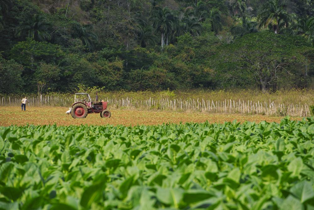 Peter Mercieca Cuba 6363 .jpg