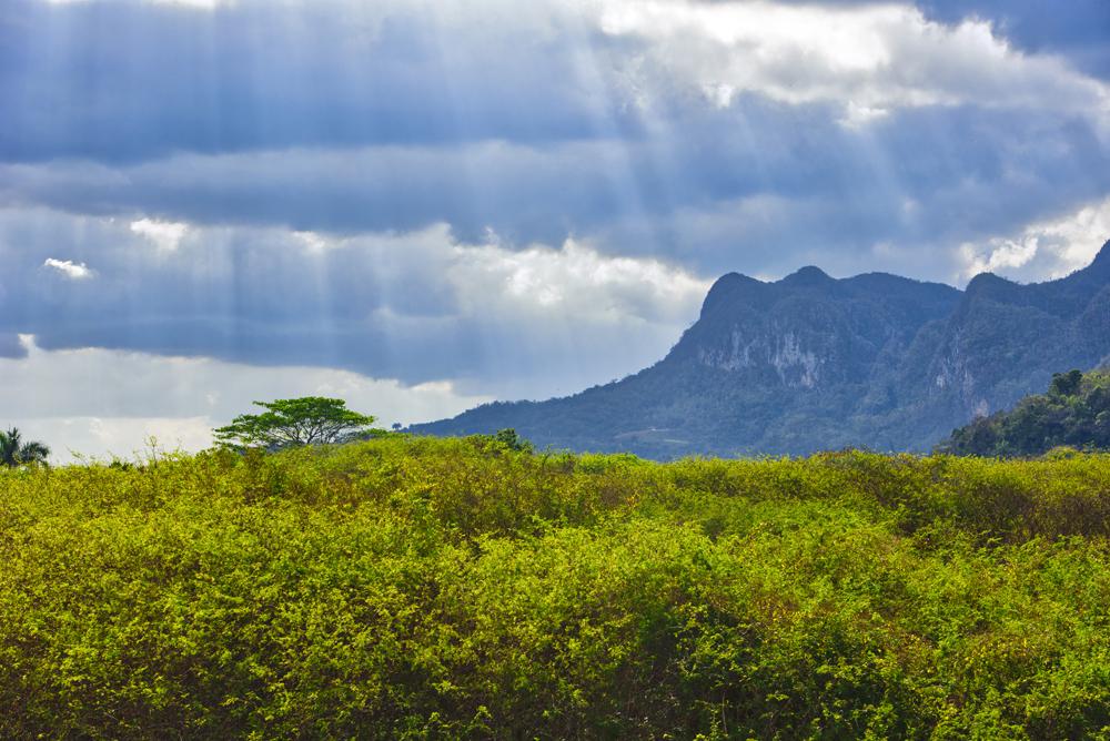 Peter Mercieca Cuba 6511 .jpg