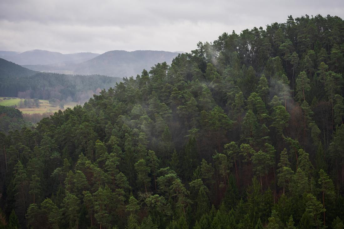 German Forest 271117 1493.jpg