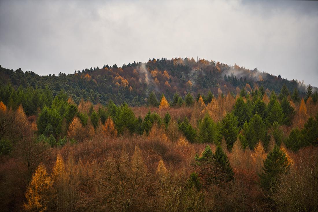 German Forest 271117 1424.jpg