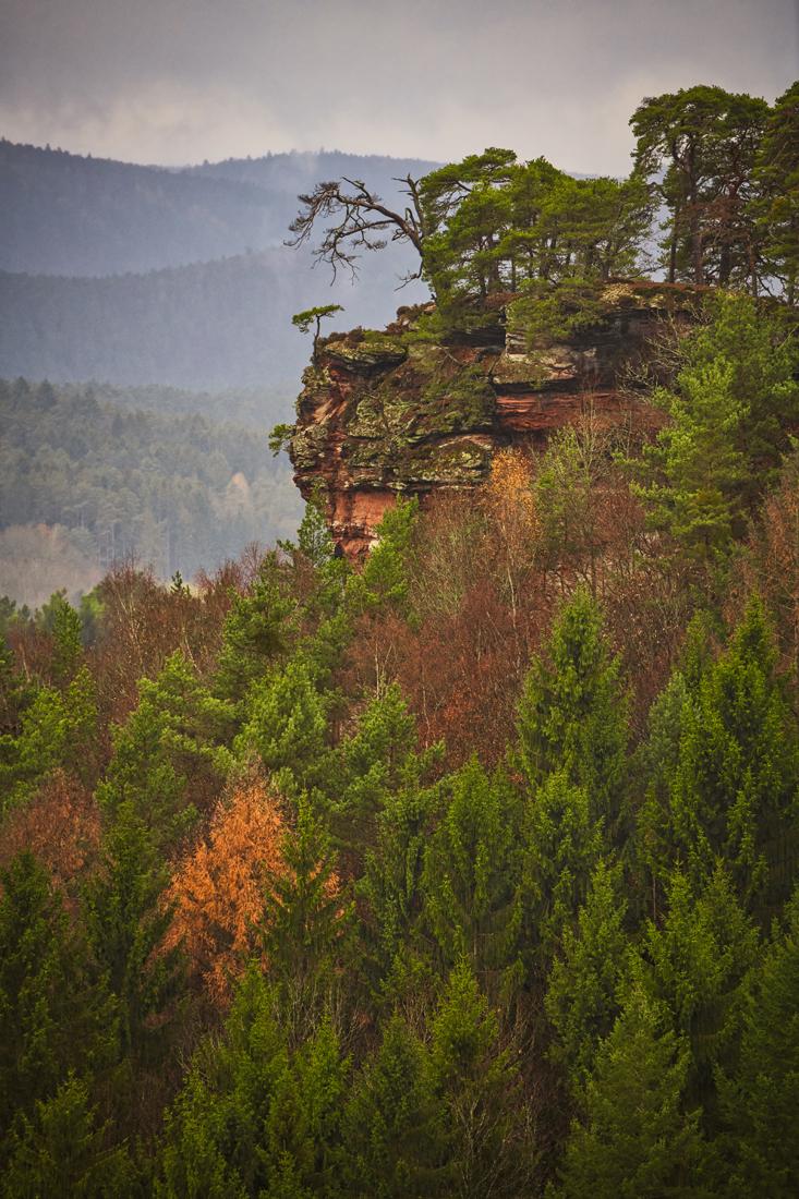 German Forest 271117 1513.jpg