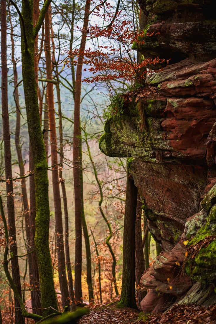 German Forest 271117 1620.jpg