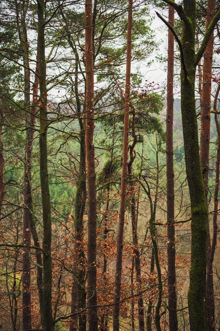 German Forest 271117 1637.jpg