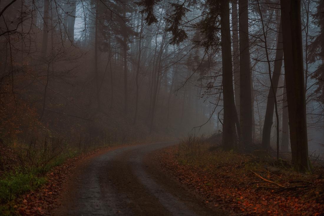 German Forest 271117 1674.jpg