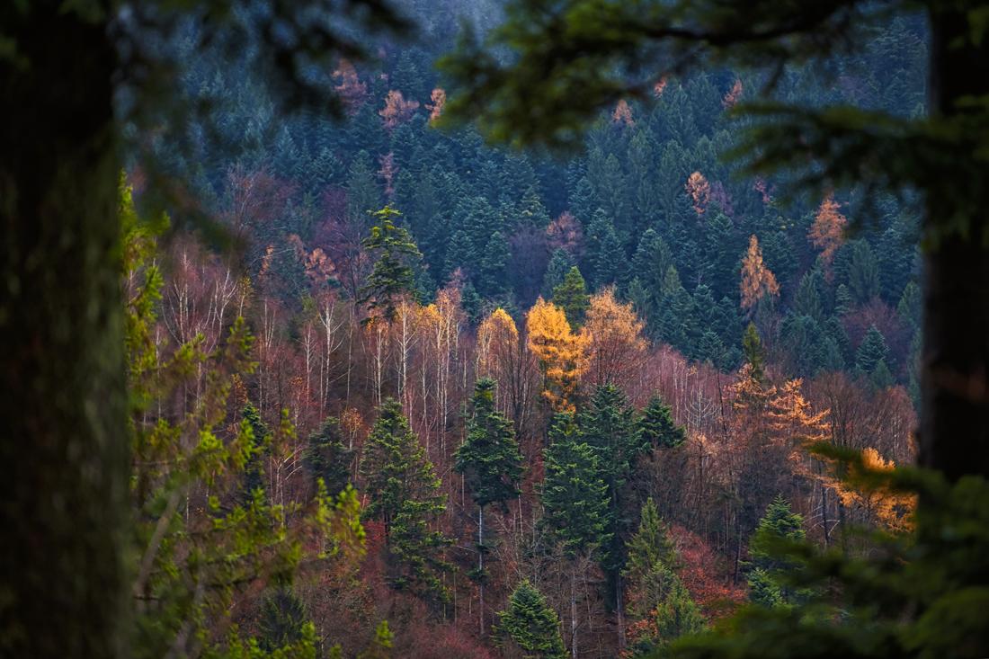 German Forest 281117 1785.jpg