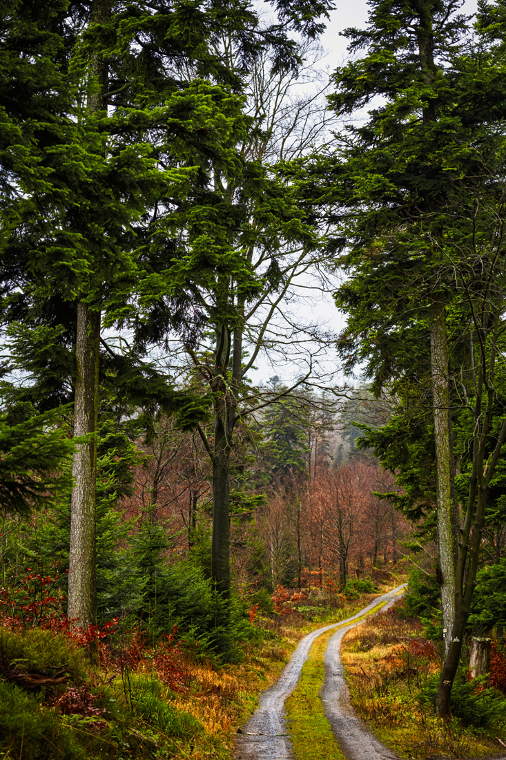 German Forest 281117 1872.jpg