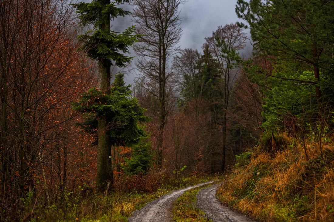 German Forest 281117 1908.jpg