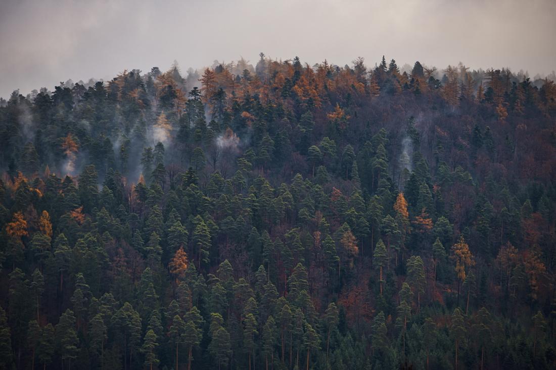 German Forest 291117 2126.jpg