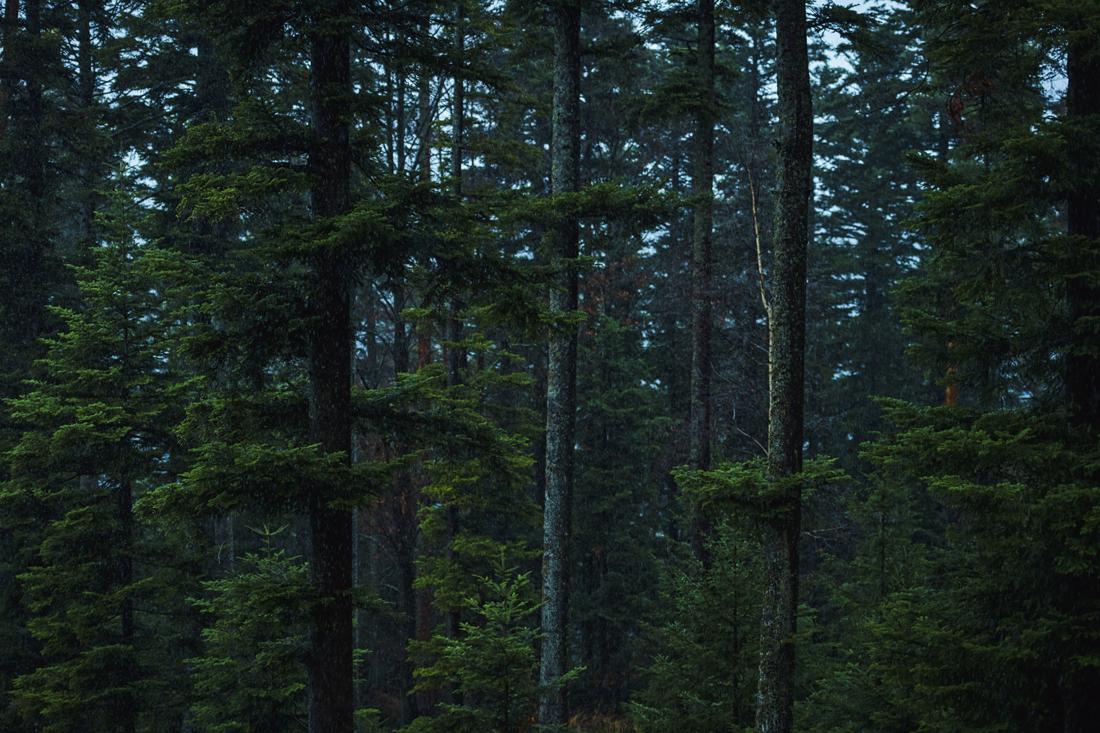German Forest 281117 2080.jpg