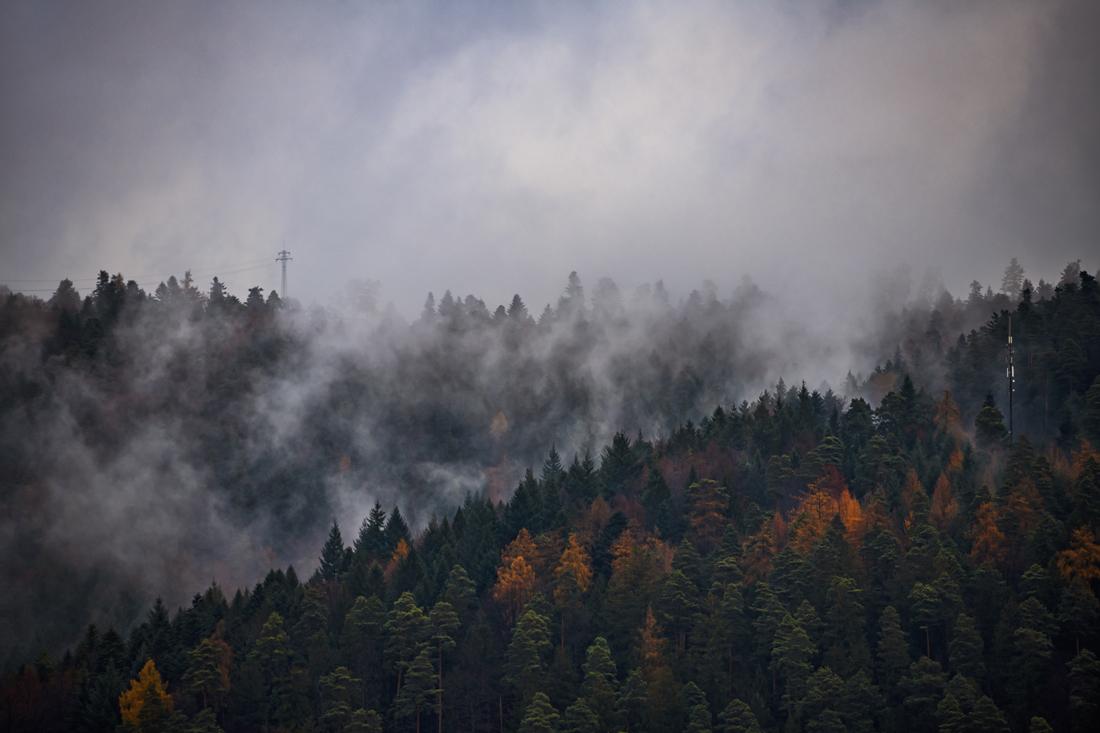 German Forest 291117 2134.jpg