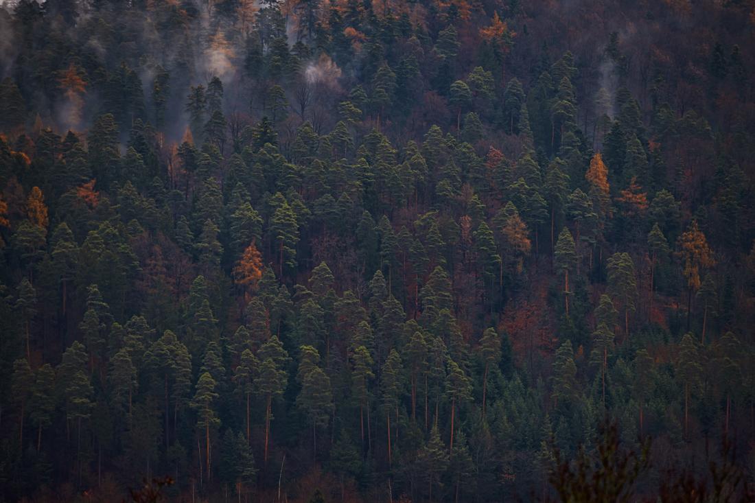 German Forest 291117 2127.jpg