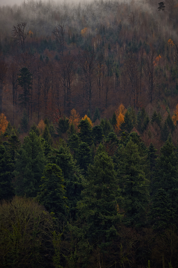German Forest 291117 2151.jpg