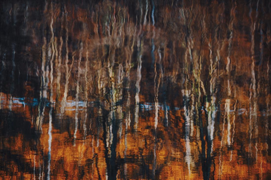 German Forest 291117 2239.jpg