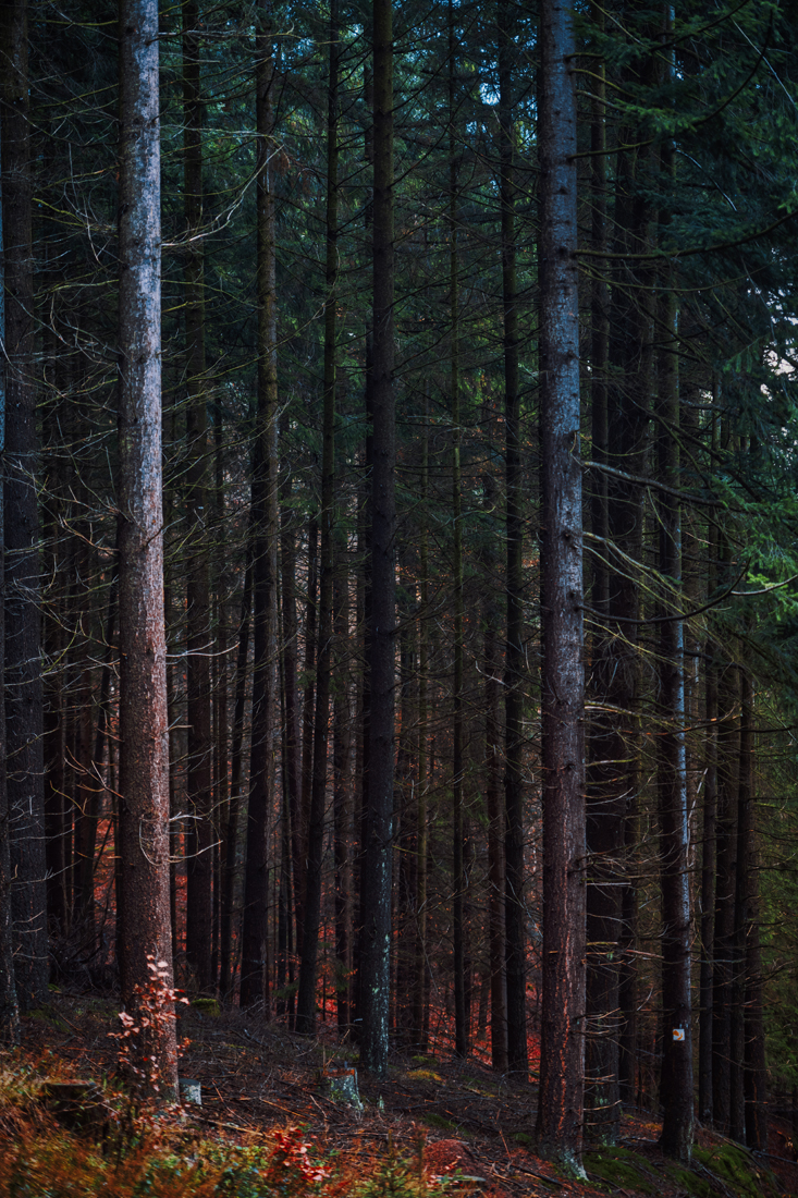 German Forest 291117 2292.jpg
