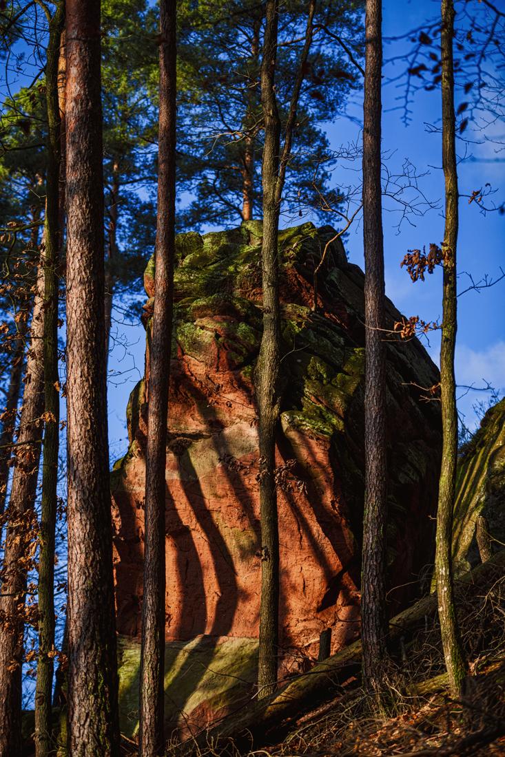 German Forest 291117 2306.jpg