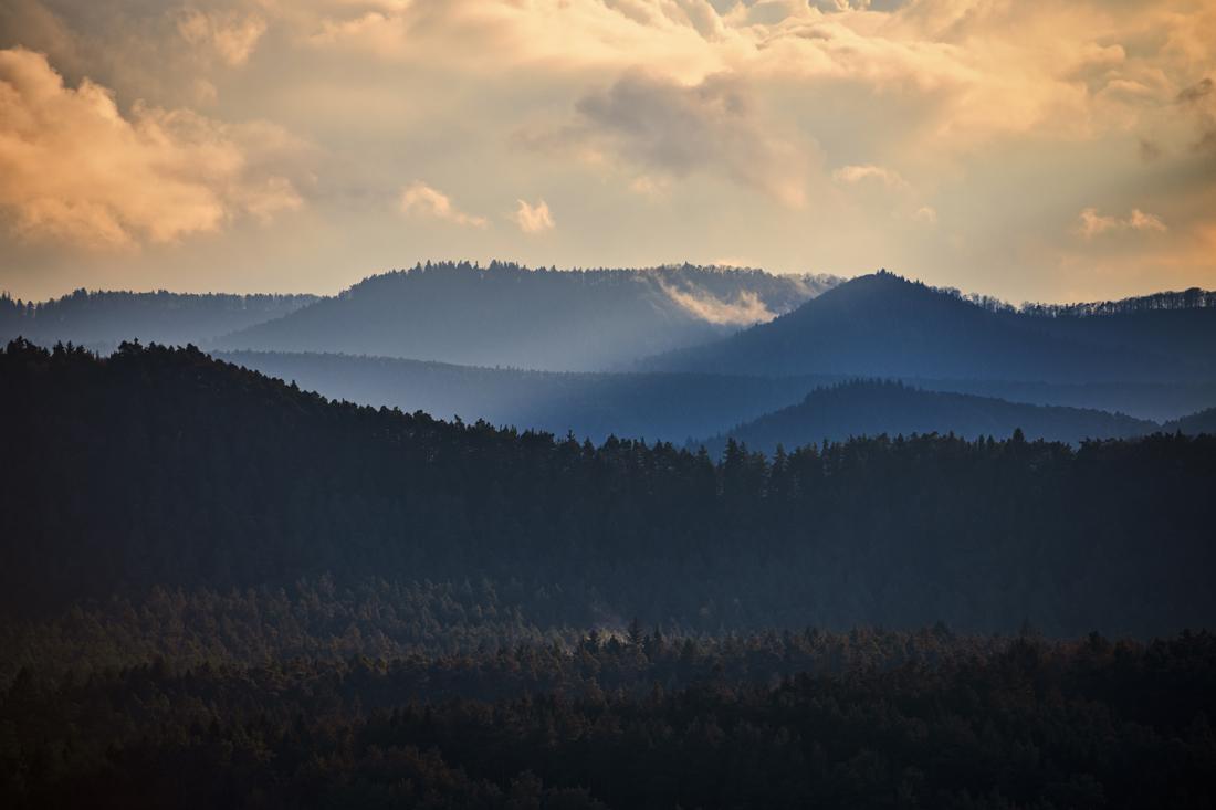 German Forest 291117 2323.jpg