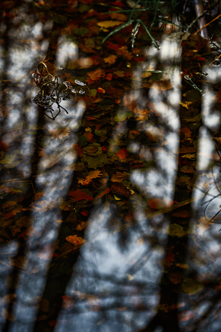 German Forest 291117 2357.jpg