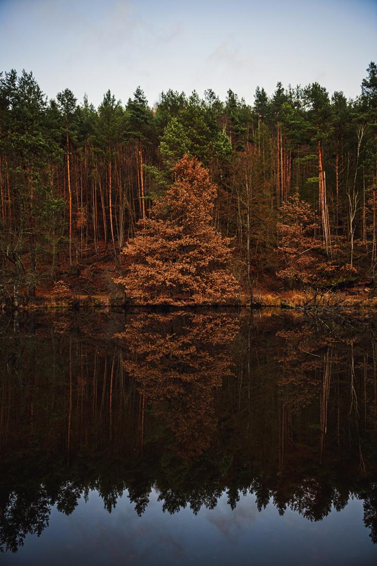 German Forest 291117 2389.jpg