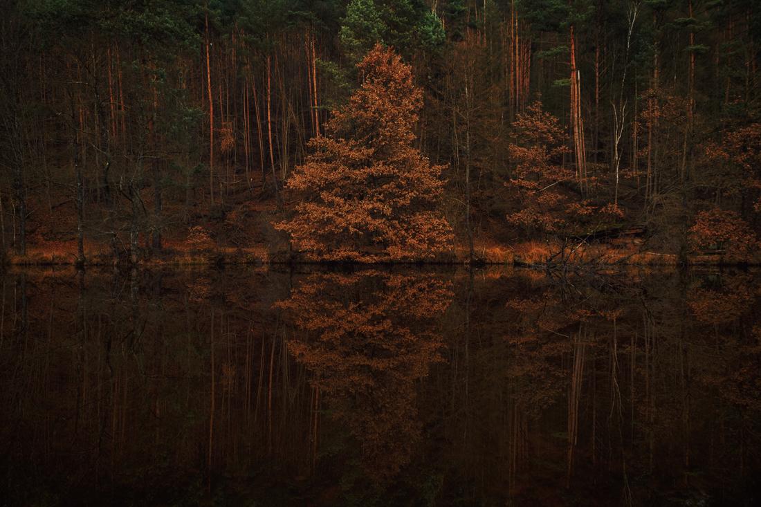 German Forest 291117 2393.jpg