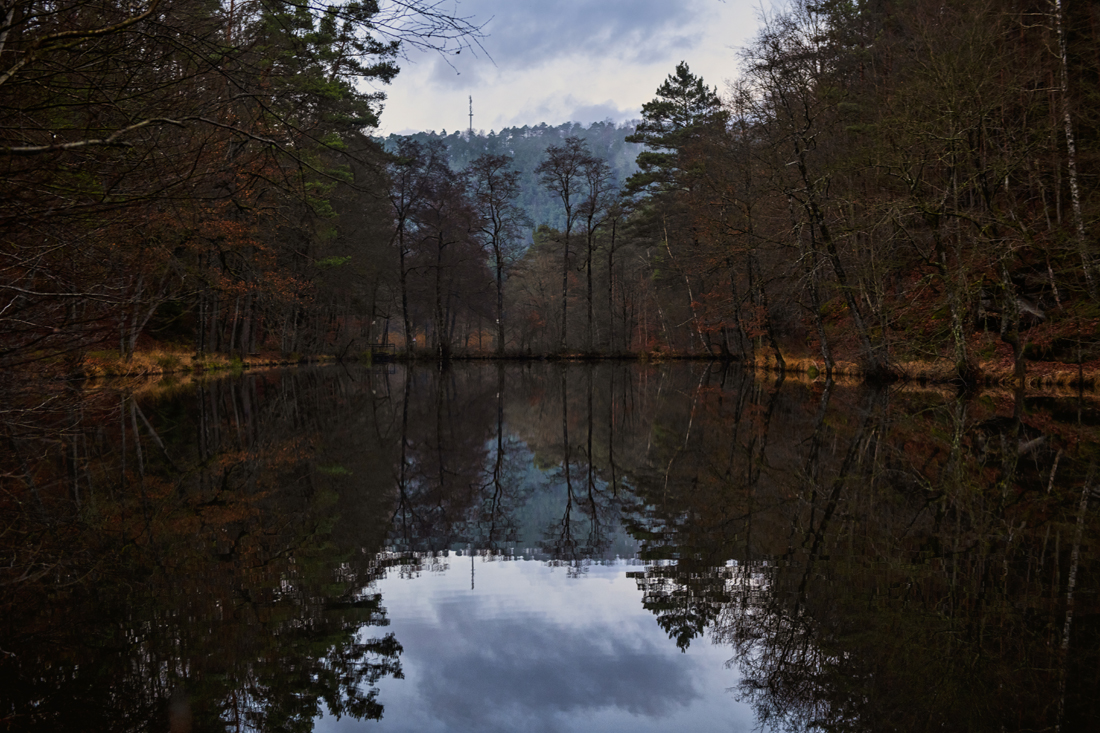 German Forest 291117 2465.jpg