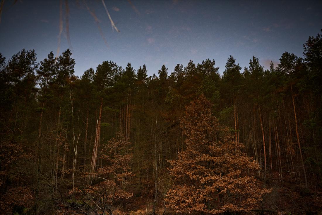 German Forest 291117 2442.jpg