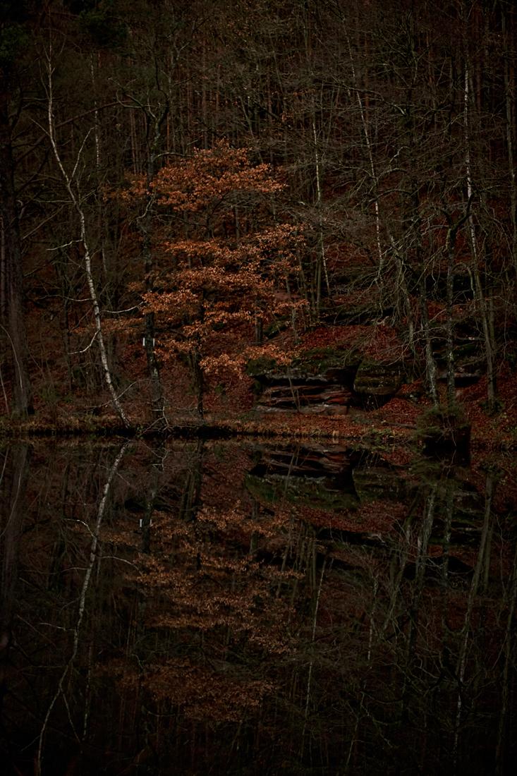 German Forest 291117 2516.jpg