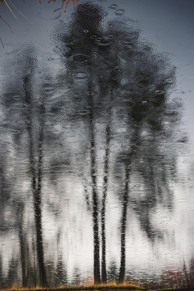 German Forest 301117 2850.jpg