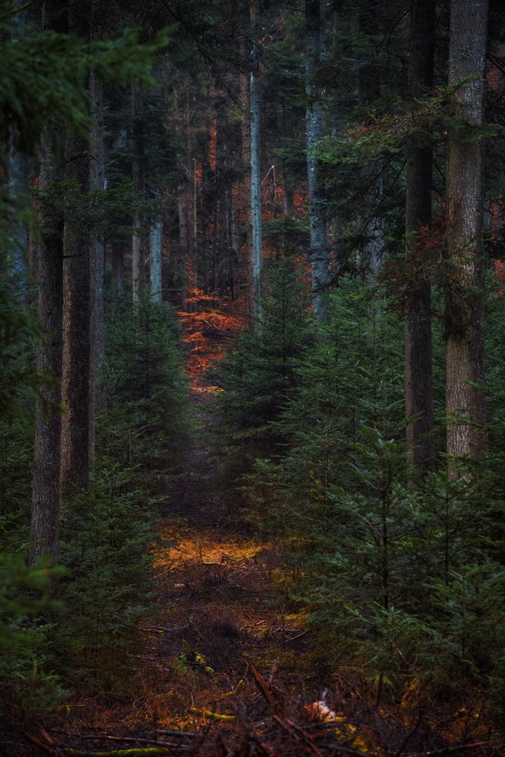 German Forest 301117 2995.jpg