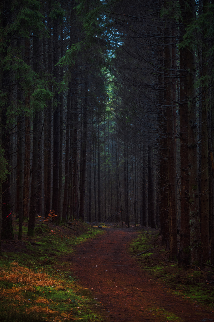 German Forest 301117 3001.jpg