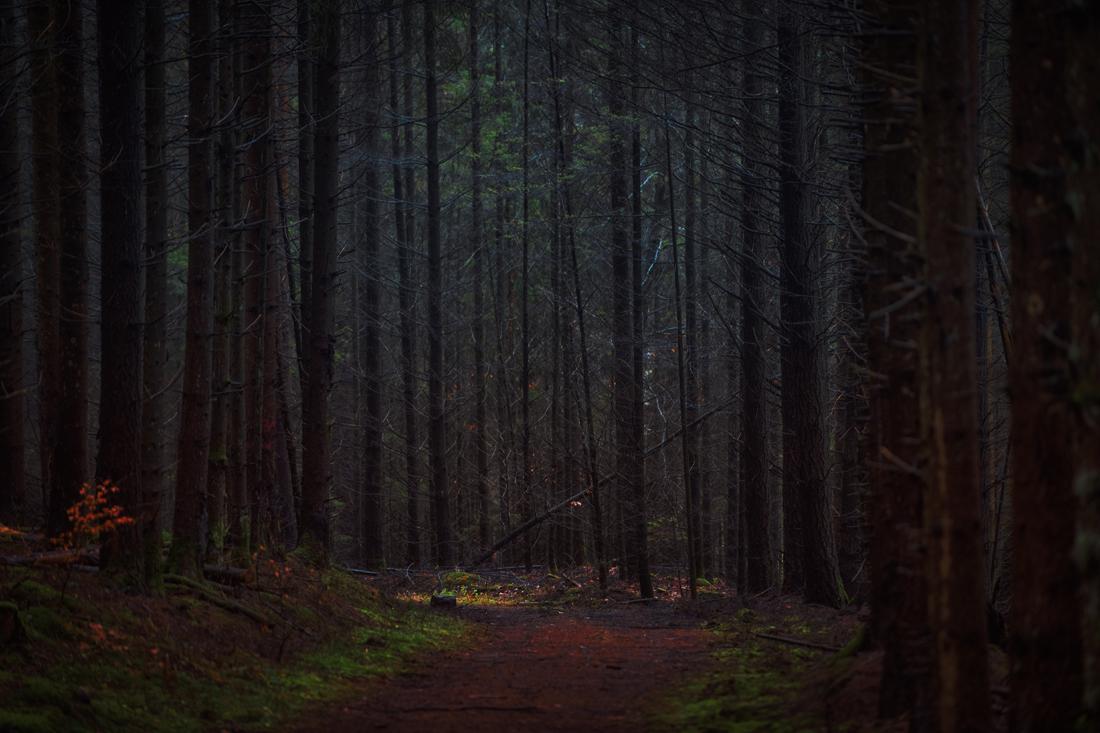 German Forest 301117 3004.jpg