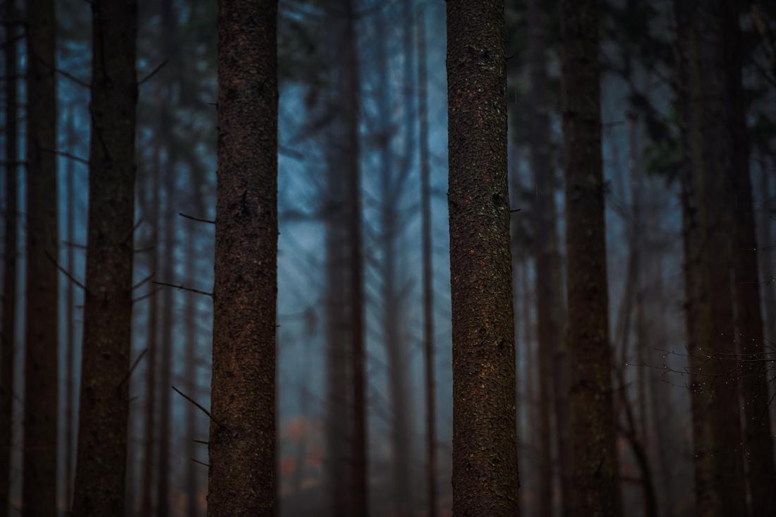 German Forest 301117 3007.jpg